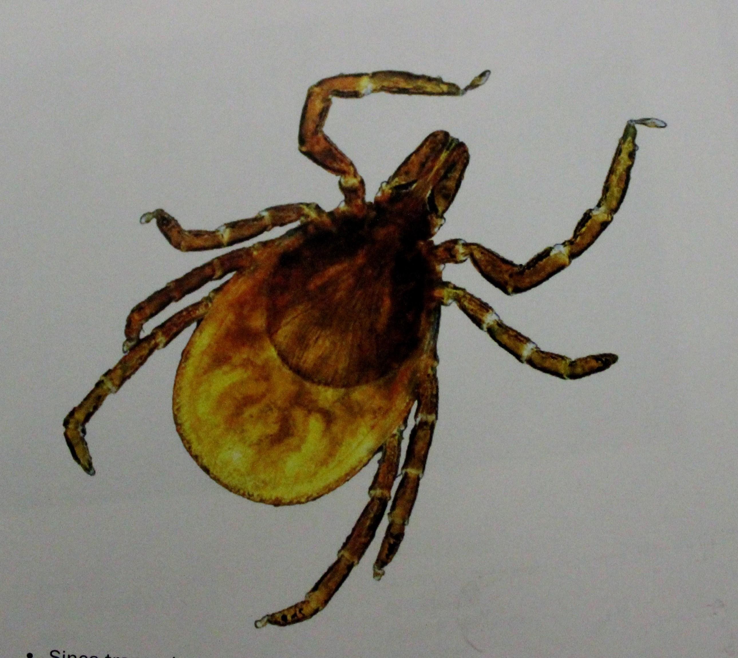 Preventing Lyme disease