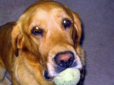 Pet Dentistry at Capeside Animal Hospital