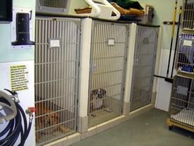 Pet Boarding at Capeside Animal Hospital