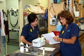 Cancer Chemotherapy Services at Capeside Animal Hospital