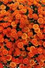 /Images/johnsonnursery/product-images/Izola_orange_0fb6qpxfq.jpg