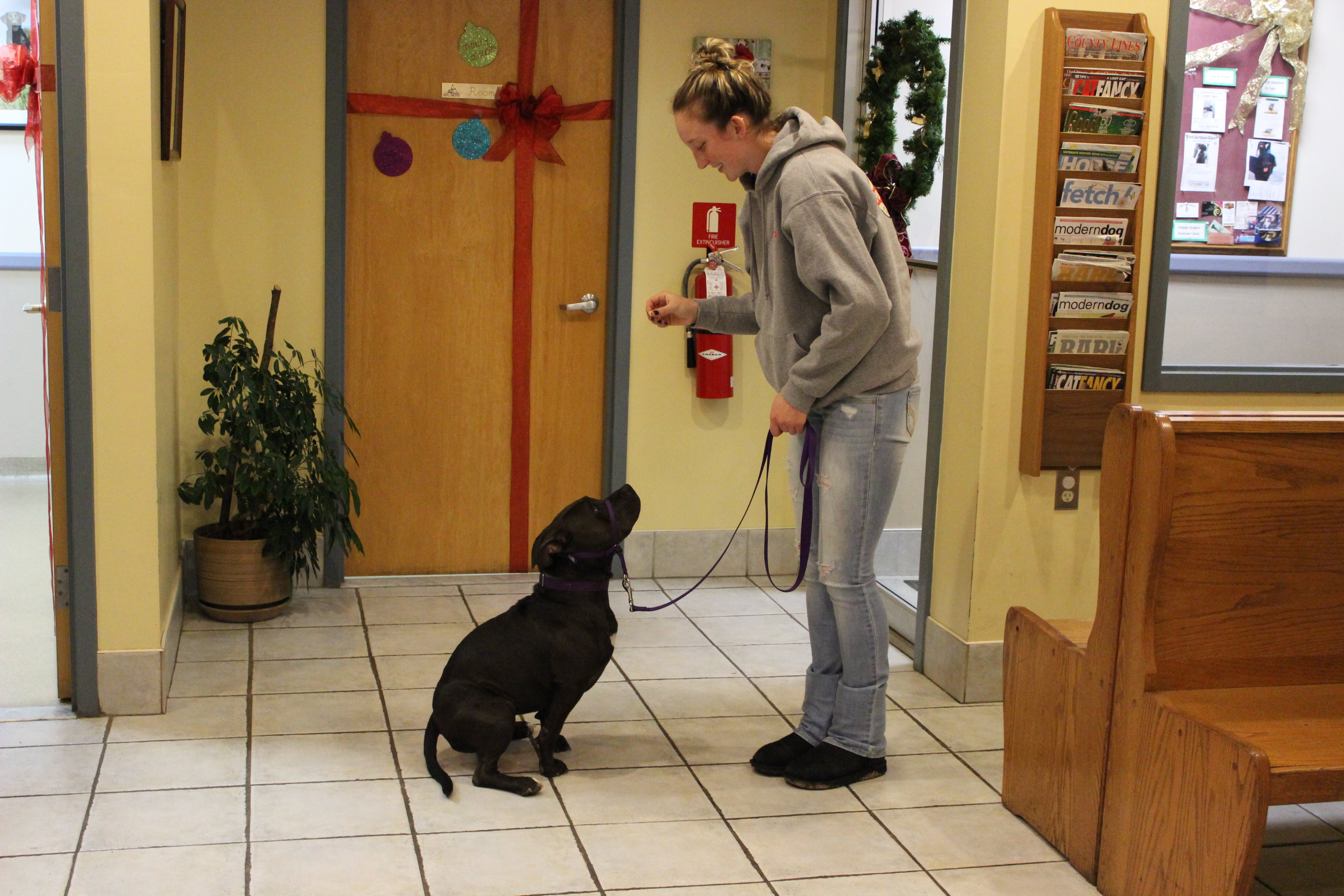 Training tips and helpful hints for dogs