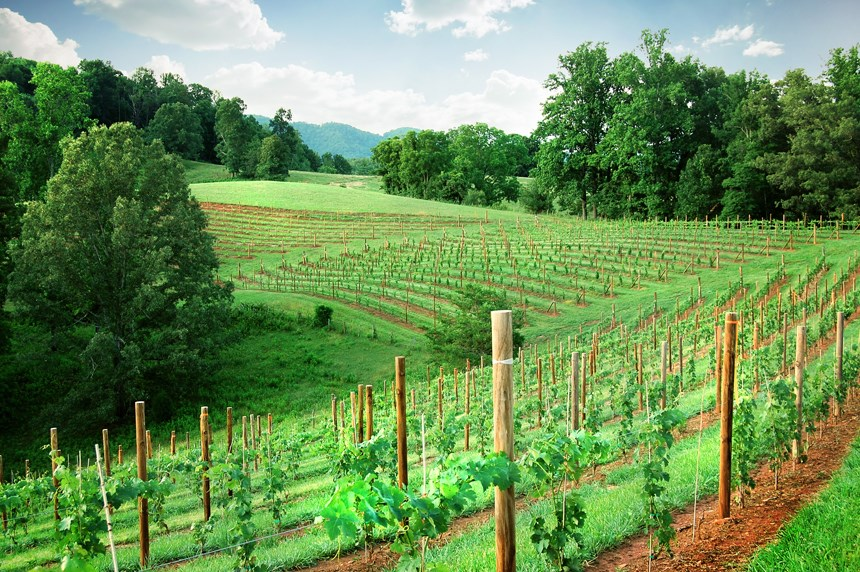 Addison Farms Vineyard - 2