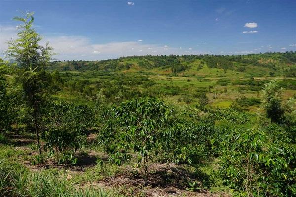 Burundi Farm