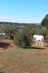 Amakhala Game Reserve - HillsNek Safari Camp - 3