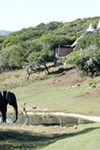 Amakhala Game Reserve - Safari Lodge - 3